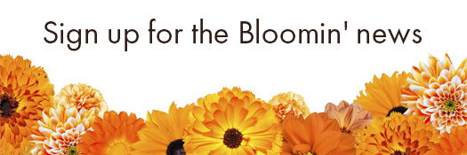 sign up for the Bloomin News